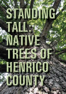 Standing_Tall_Native_Trees_DVD_Cover